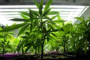 Marijuana grow-lights cause problems for ham-radio operators
