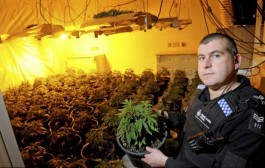 How cops are catching grow ops with AM radios