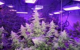 Grow Lights & RFI